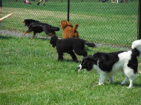 Doylestown Dog Park Application